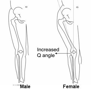 leg[1]